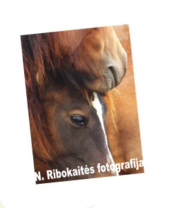 paveikslėlis sartų žirgai